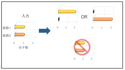 図2:HOM干渉での入出力光子数分布。ビームスプリッタへの入力が各経路に1光子ずつの場合は、どちらか一方の経路に2光子が必ず出力される。各経路に1光子ずつ出力されるイベントは量子力学的な干渉効果で消失する。